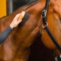 28898 Уход за лошадью