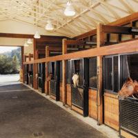 Содержание лошадей в конюшне фото - 17023 200x200