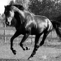 28904 Болезни лошадей и их выявление