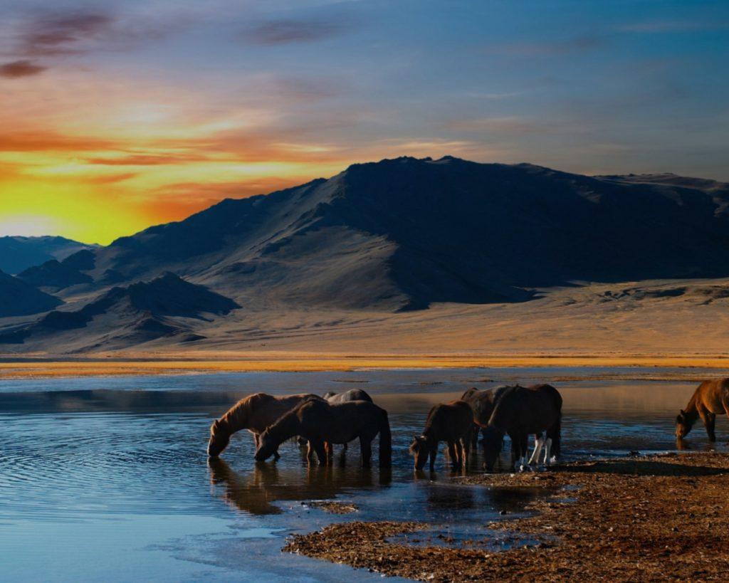 Содержание лошадей в табуне фото - 17027 1024x819