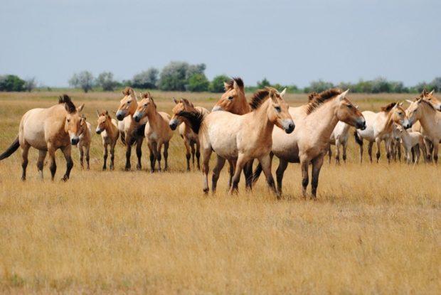 Содержание лошадей в табуне фото - 17028