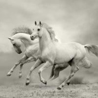 Покупка лошади – как не ошибиться фото - 17181 200x200