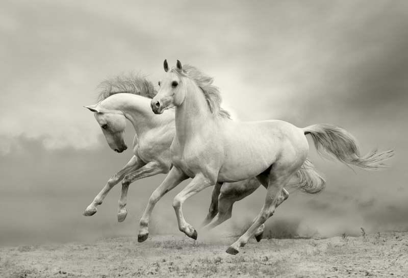 Покупка лошади – как не ошибиться