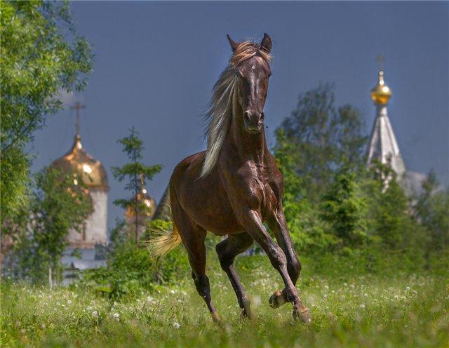 Покупка лошади – как не ошибиться фото - 17182
