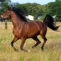 Способы подковки лошадей фото - 17187 200x200