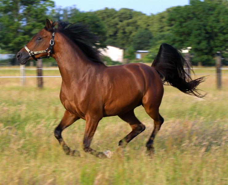 Способы подковки лошадей