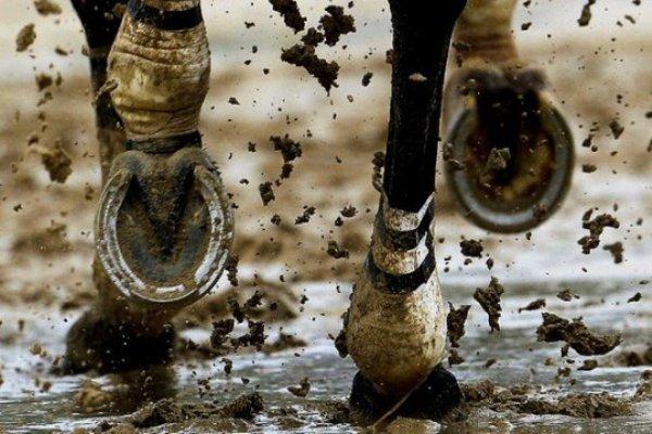 Способы подковки лошадей фото - 17188