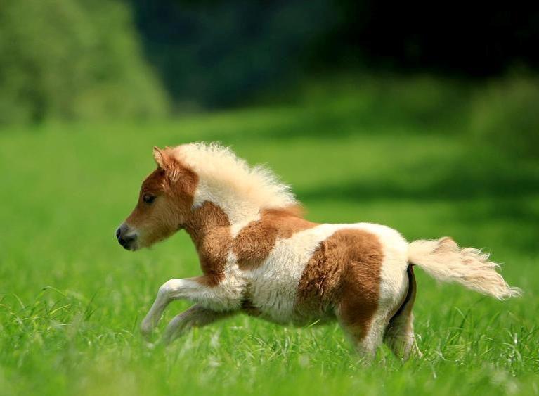 Основное снаряжение для лошадей и пони фото - 17190