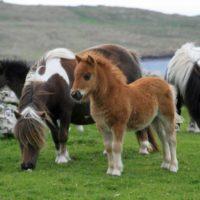 Основное снаряжение для лошадей и пони фото - 17192 200x200