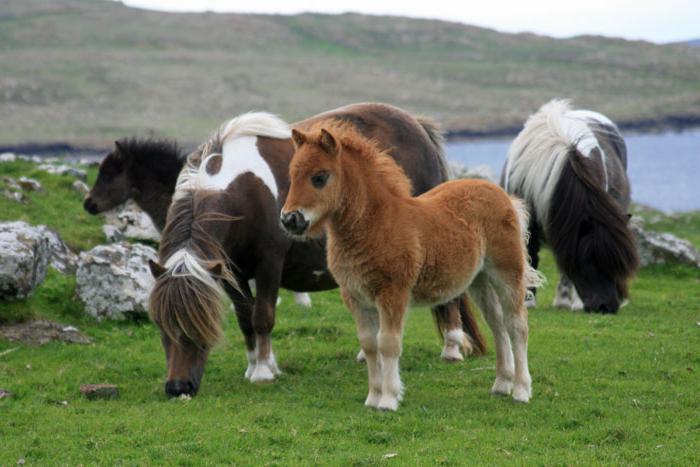 Основное снаряжение для лошадей и пони