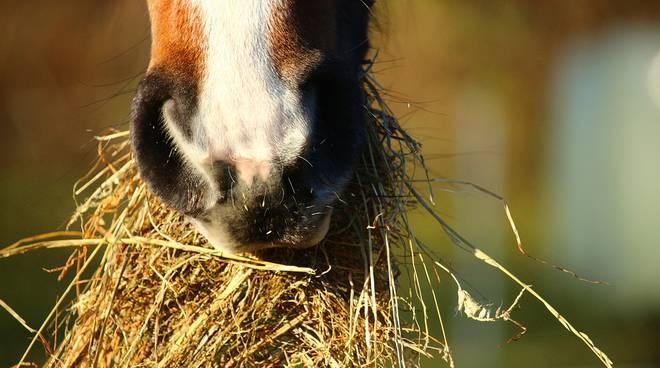 Требования к кормам для лошадей фото - 17194