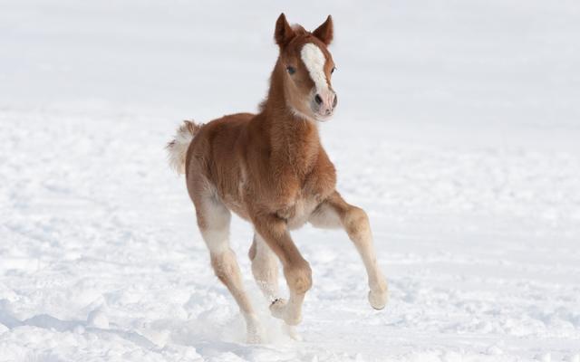 Разведение лошадей и племенная работа фото - 17197