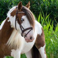 28932 Разведение лошадей и племенная работа