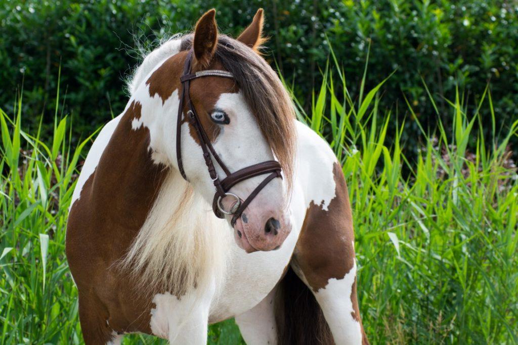 Разведение лошадей и племенная работа