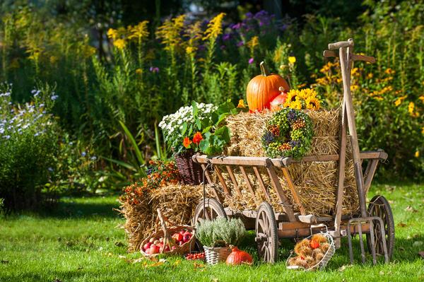 Лунный посевной календарь на 16 — 31 октября 2018 года