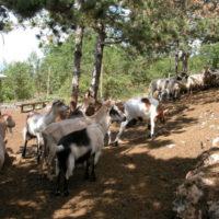 29348 Помещение для коз