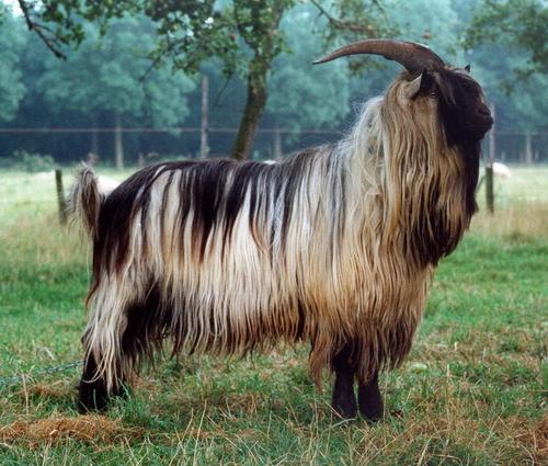 Основные стандарты на козий пух