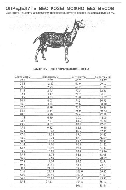 Как определить вес козы? фото - 22466