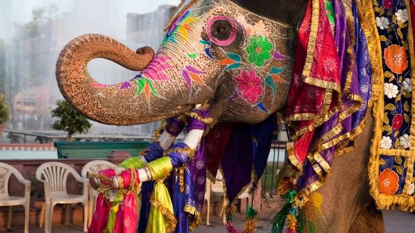 В Индию за приключениями фото - 23109