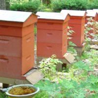 29812 Двухкорпусные конструкции пчелиных ульев