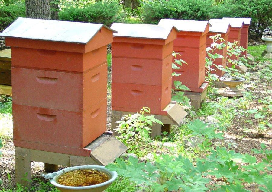 Двухкорпусные конструкции пчелиных ульев