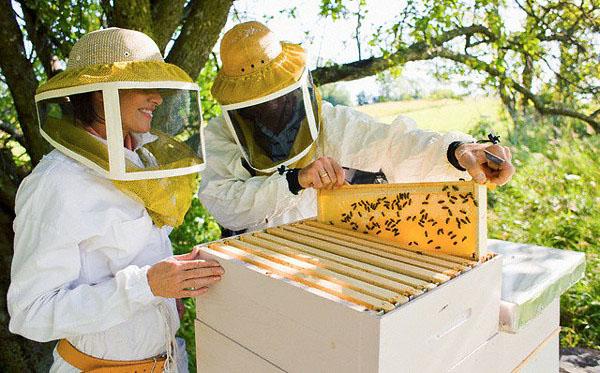 Обзор одежды для пчеловода