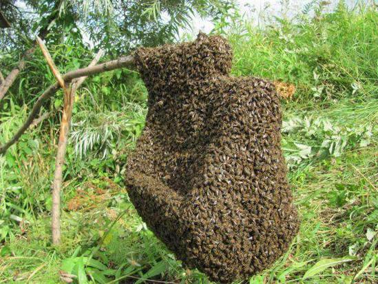Для чего пчеловодам нужна дым-пушка фото - 24968