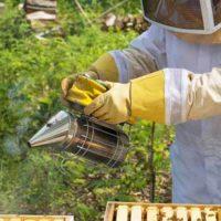 Дымарь для пчел — какой выбрать и как пользоваться фото - 25516 200x200