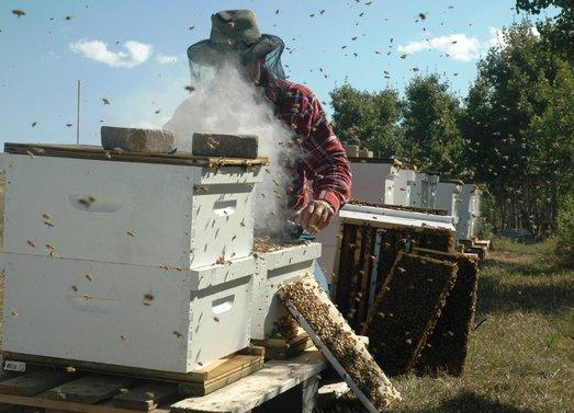 Дымарь для пчел — какой выбрать и как пользоваться фото - 25517