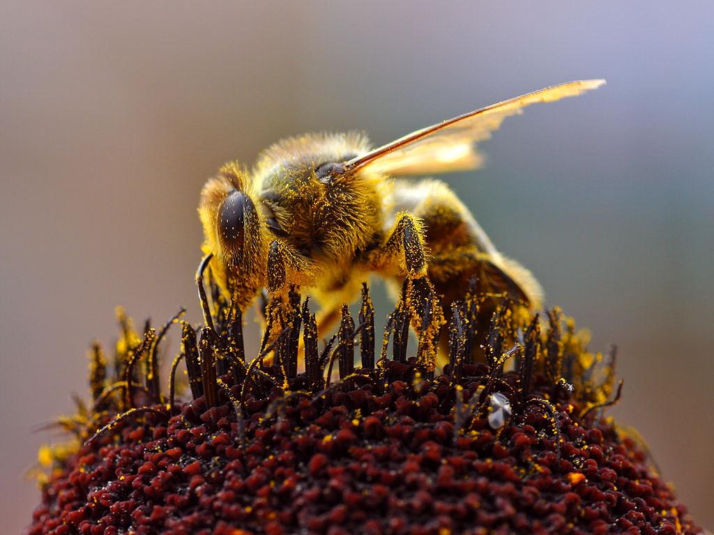 Какое количество пчел в одном улье?