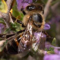 Состав пчелиной семьи фото - 25904 200x200