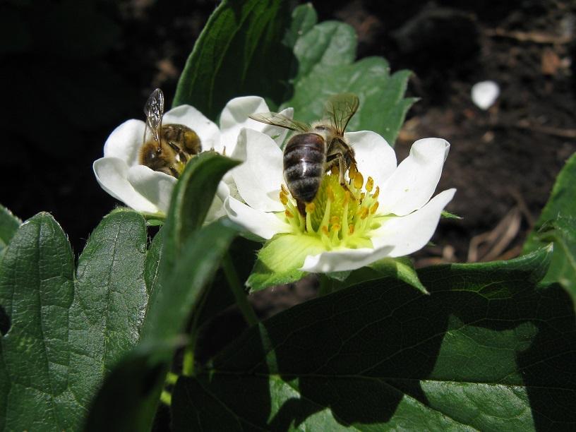 Лечение грыж пчелиным ядом фото - 25907