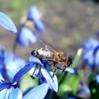 Лечение грыж пчелиным ядом фото - 25908 200x200