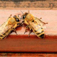 29991 Какие растения любят опылять пчелы?