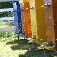 29995 Как избавиться от пчел соседей