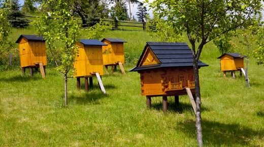 Все о пчелах для детей