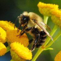 30013 Все о пчелах для детей