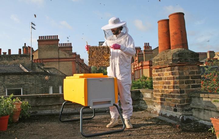Как устроены пчелы: сколько глаз, крыльев, желудков, ног фото - 26171