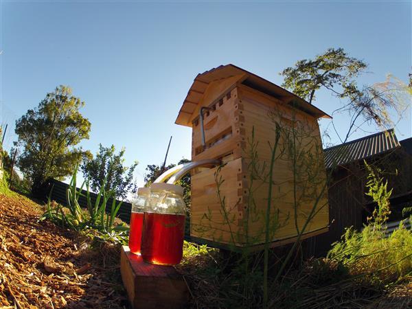 Как устроены пчелы: сколько глаз, крыльев, желудков, ног фото - 26172