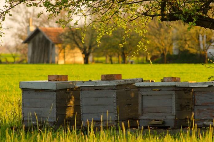 Как устроены пчелы: сколько глаз, крыльев, желудков, ног фото - 26175