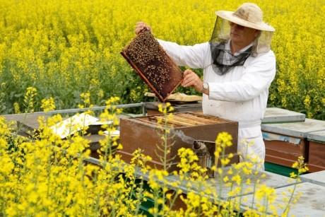 Как и когда обрабатывать пчел бипином