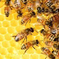 Тайная жизнь пчел фото - 26505 200x200