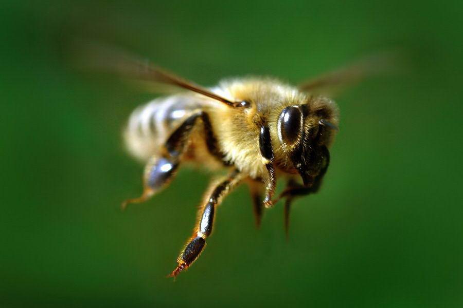 Тайная жизнь пчел фото - 26506