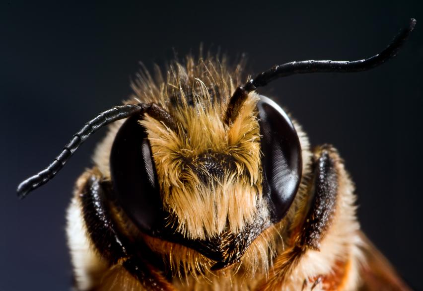 Тайная жизнь пчел фото - 26507