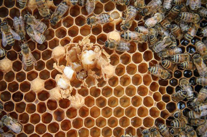 Тайная жизнь пчел фото - 26508