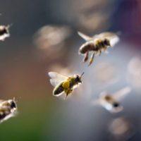 30111 Что влияет на численность пчелиных семей