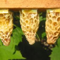 30118 Тайная жизнь пчел в разные сезоны