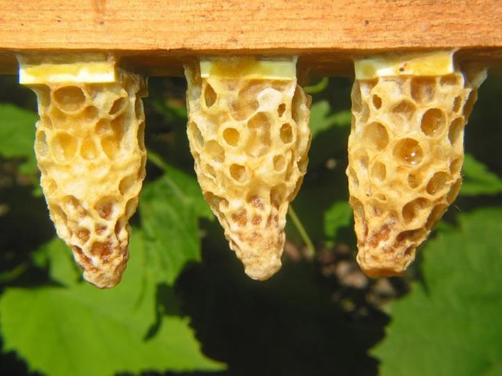 Тайная жизнь пчел в разные сезоны