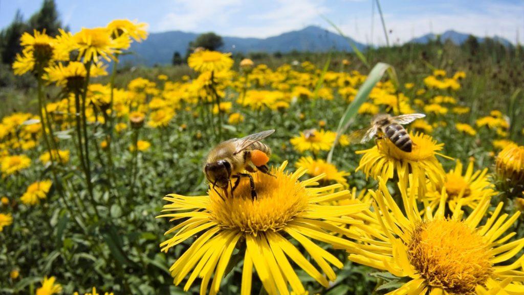 Чем лечить пчел или вовсе не лечить? фото - 26952