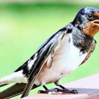 30094 Оседлые и перелетные птицы: в чем различие